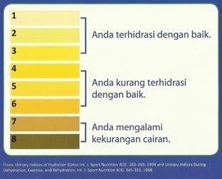 (Gambar panduan penilaian status hidrasi berdasarkan warna urin)